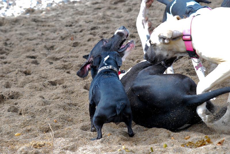dogs_beach-014.jpg