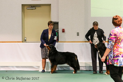 Sweeps 12-15 mos Puppy Dogs BMDCA 2017