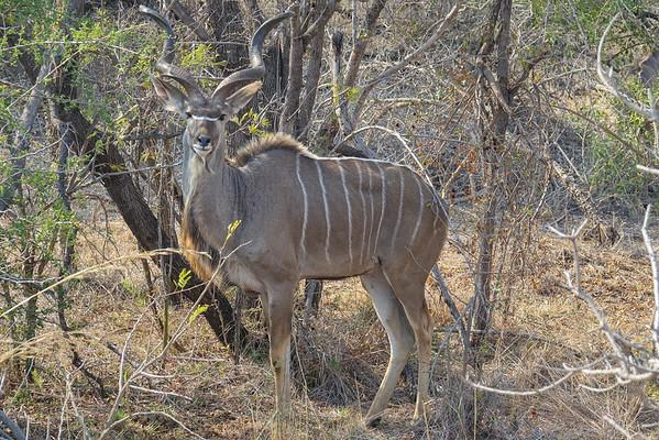 Day 8, Kruger National Park
