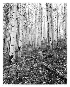 2014.10 - Inner Basin Trail #29