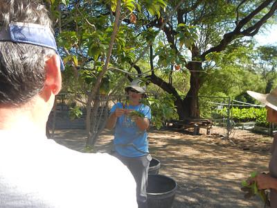 2104-10-11 Maui Nui Botanical Garden