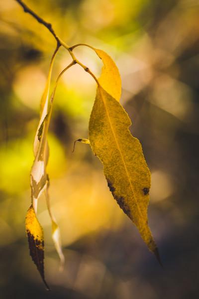 20151024-Fall Colors-31.jpg