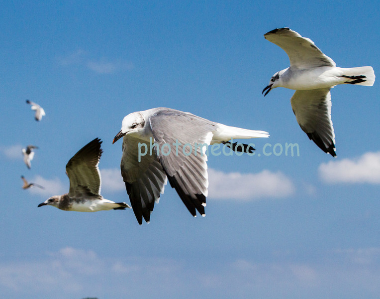 Sea Gull's