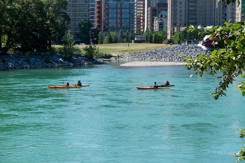 Kaiks on the Bow River.