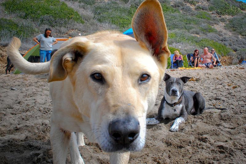 dogs_beach-083.jpg