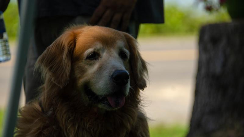 PuppyParty18-513.jpg