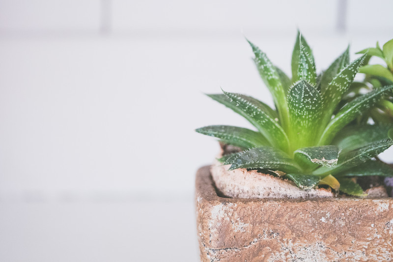 Succulents In White Cabinet-5.jpg