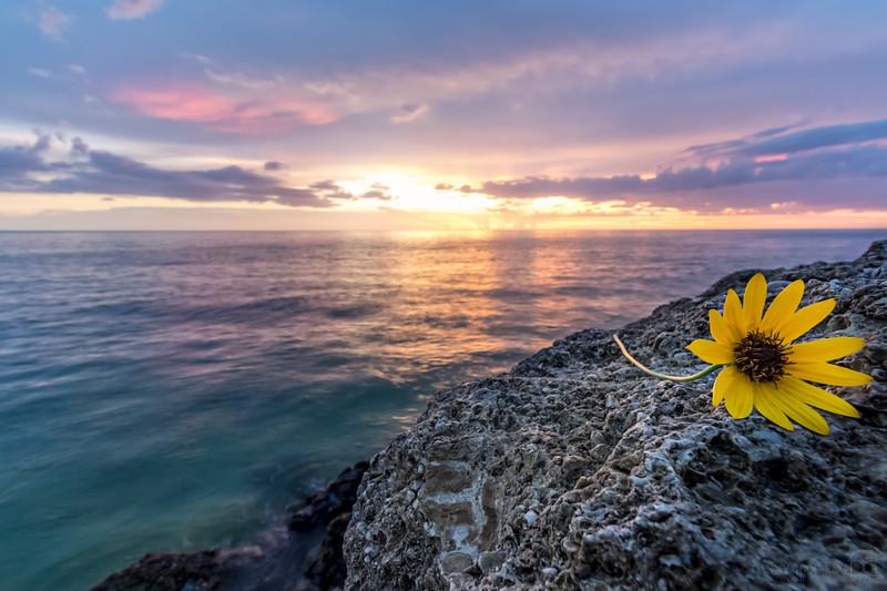 Sunset in Boca Grande with bonus flower