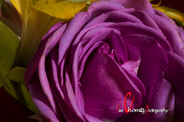 Mothers Day Roses