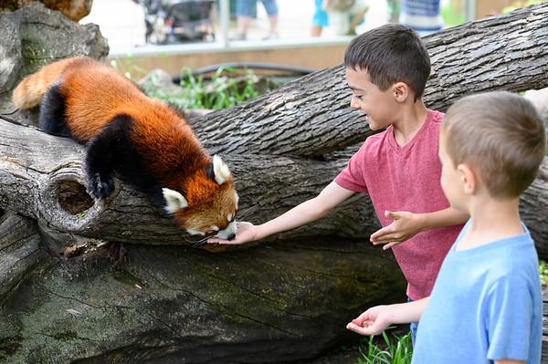 RRZ Red Pandas