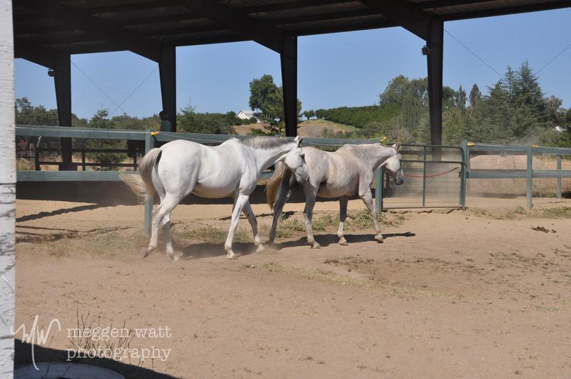 EB&Horses-096.jpg
