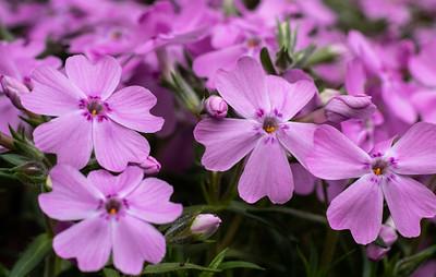 Flowers2019