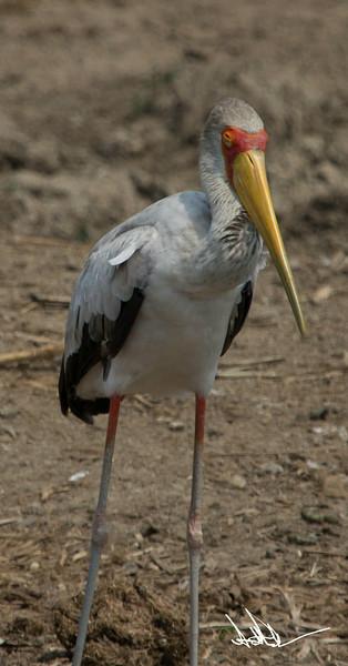 StorksS-6.jpg