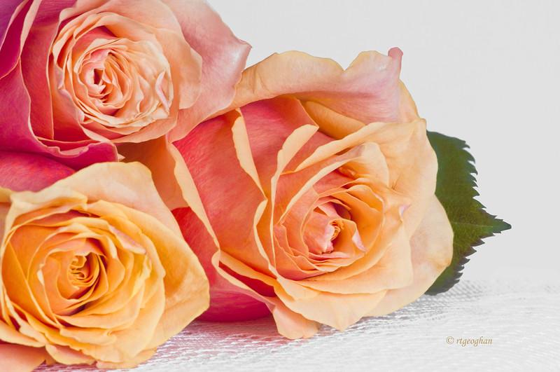 Mar 3_Roses_0741.jpg