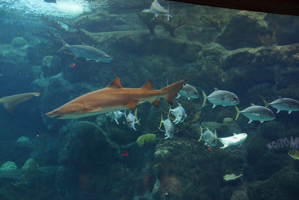 Florida Aquarium & Dolphin Cruise