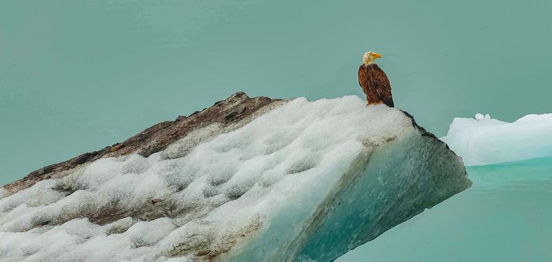 Glacier Bay 17 (1).jpg