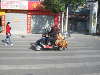 November 09: Guilin and the Li river cruise