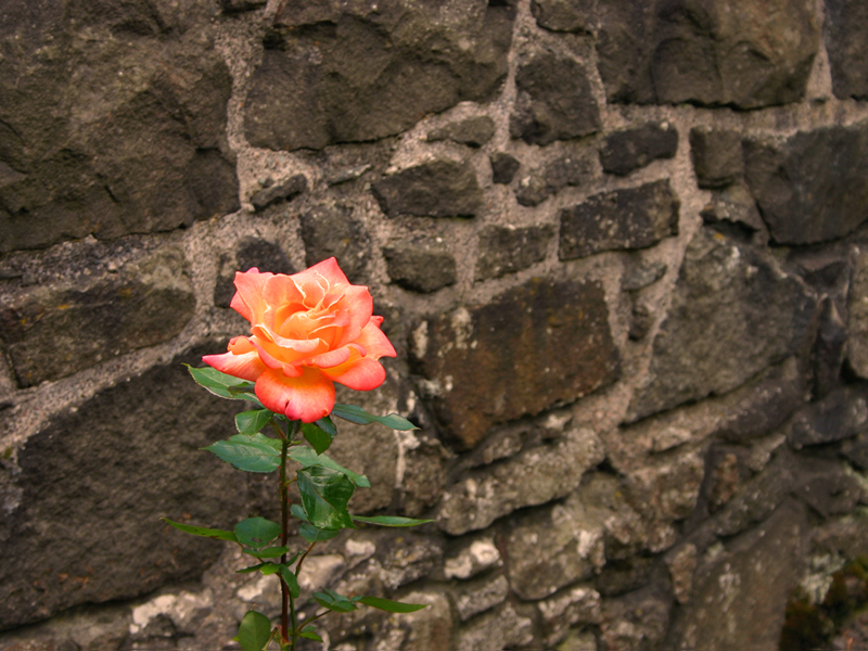 In Stirling Castle