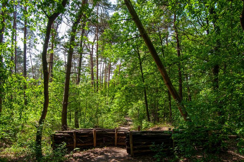 Nationaal Park Hoge Kempen - Duinengordel, omgeving Donderslag 11.jpg