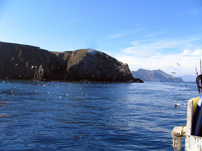 Anacapa Island Scuba Diving - 2005
