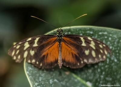 Butterflies & Moths 2018 - Set 7