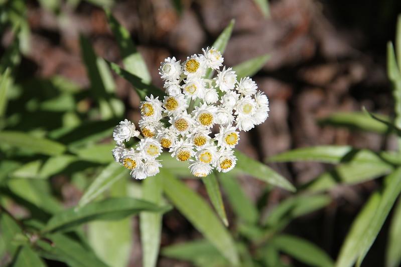 amh FLOWERS (1161).jpg