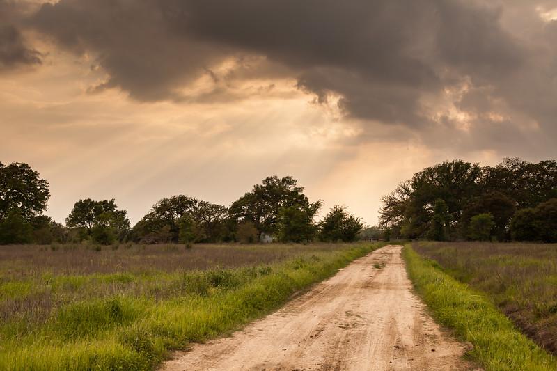 2015_4_3 Texas Wildflowers-8240-3.jpg