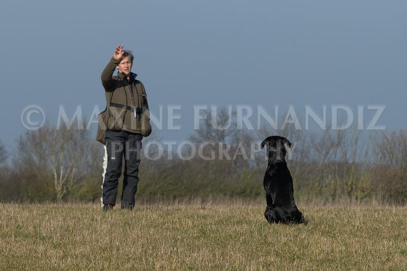 Dog Training Novice GD Feb2019-5832.jpg