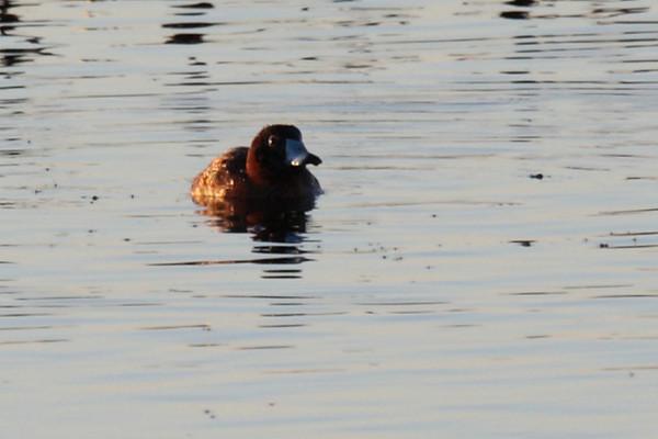 20091230 Winter in the Viera Wetlands Neighborhood