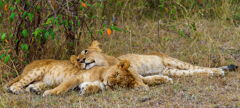 Kenya 2015-10038.jpg