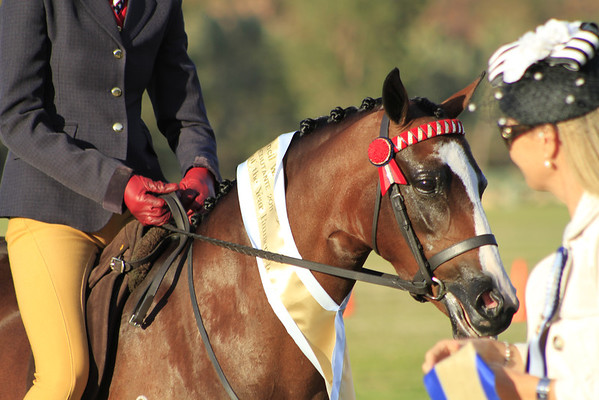 Lilydale Road Debutante and ShowHorse Council Classic