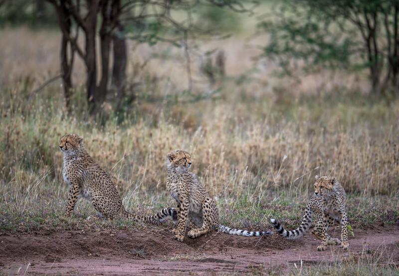Tanzania_Feb_2018-1187.jpg