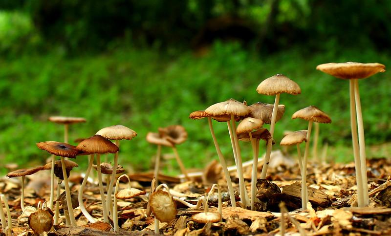 Mushrooms 6-20-15 213.jpg