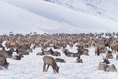 Wildlife Art and Sleigh Expedition