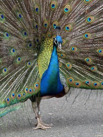 04-06-2006 - Oregon Zoo