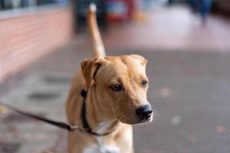 Dogs-46.jpg