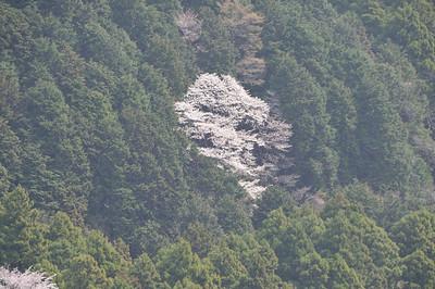 Spring 2011 in Hakone