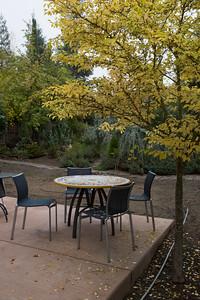 Oregon garden in Autumn_11_01_2014