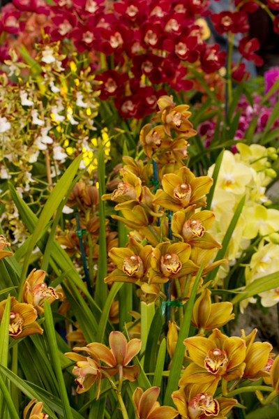 SF_Orchid_Show-24.jpg