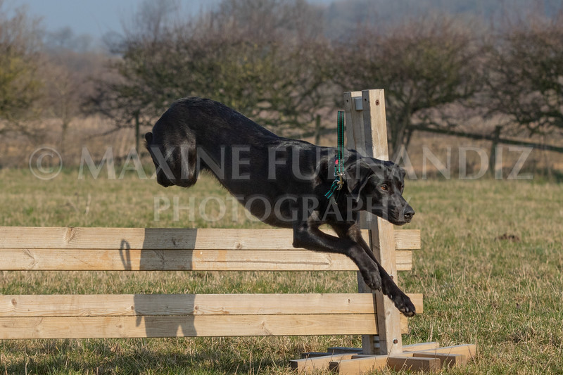 Dog Training Novice GD Feb2019-5978.jpg