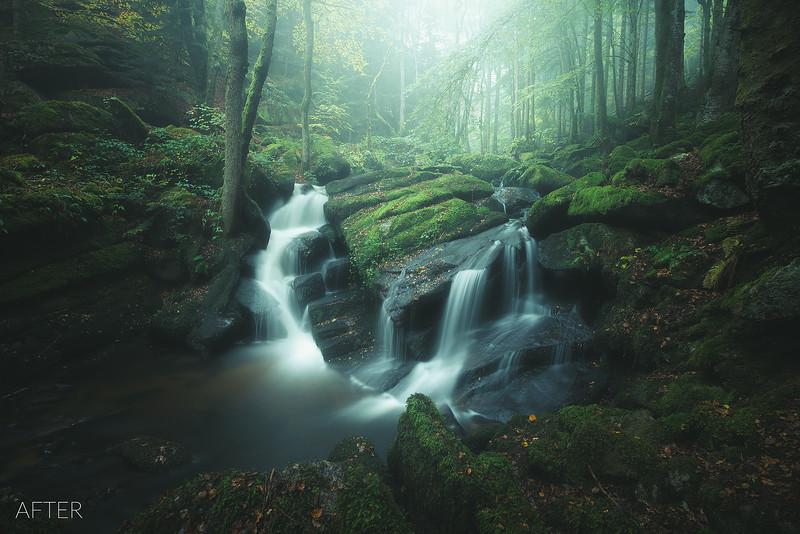 Beboy 23 Rain Forest after.jpg