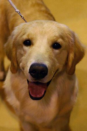 Rockland County Kennel Club - 2/25/06