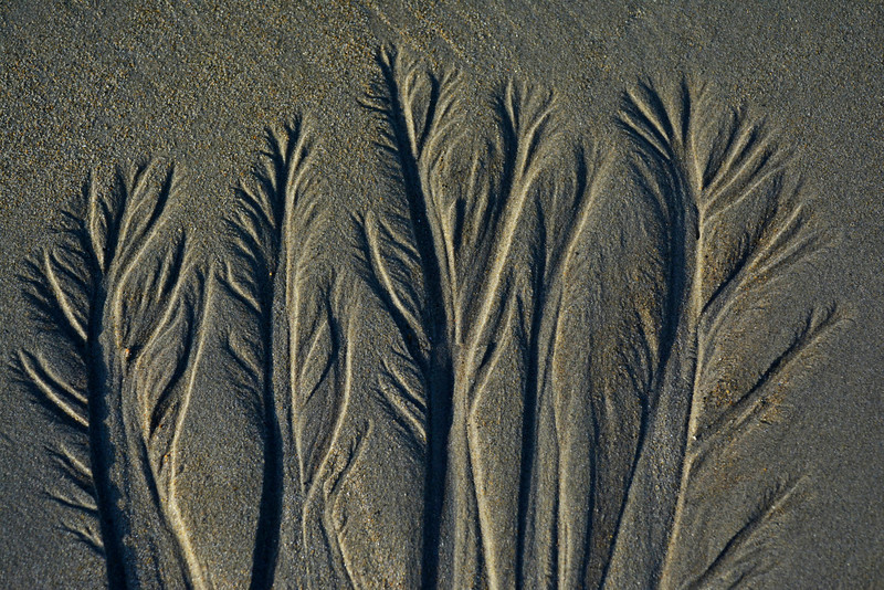 Water Channels in Sand - Trees, Roots