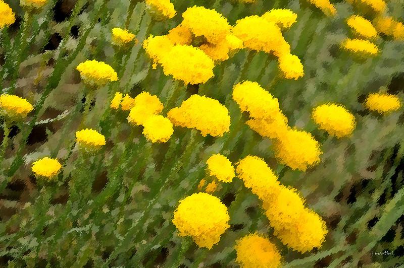 dream gardens 8 2-5-2011.jpg