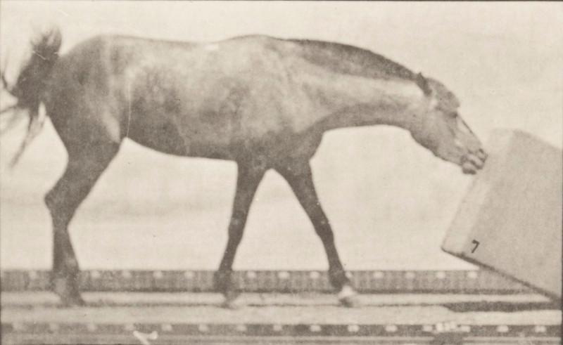 Horse Lotta rolling a box