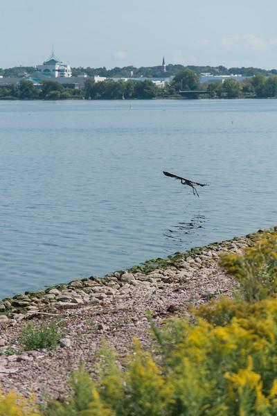Fishing at Onondaga Lake Sept 2020-13.jpg