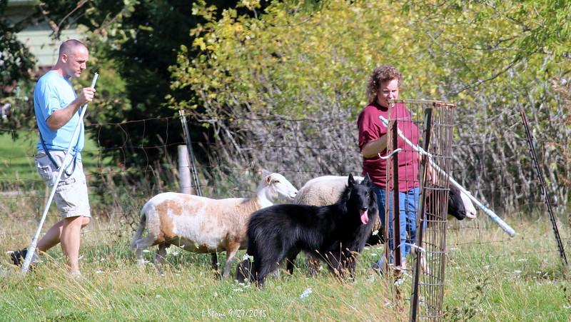 2015.9.27 Herding at Bonnies (59).JPG