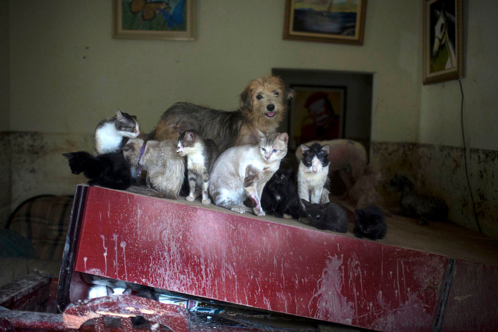 Description of . A dog and a clowder of cats seek refuge on a piece of furniture in a home flooded by heavy rains in the Xerem neighborhood, about 31 miles north of Rio de Janeiro, Brazil, Thursday, Jan. 3, 2013. Nearly 8.5 inches of rain fell in just 24 hours in the mountainous region north of Rio. Hard rains in Brazil are creating a state of alert in Rio de Janeiro and in nearby spots where flood-triggered mudslides have killed hundreds in recent years. (AP Photo/Felipe Dana)