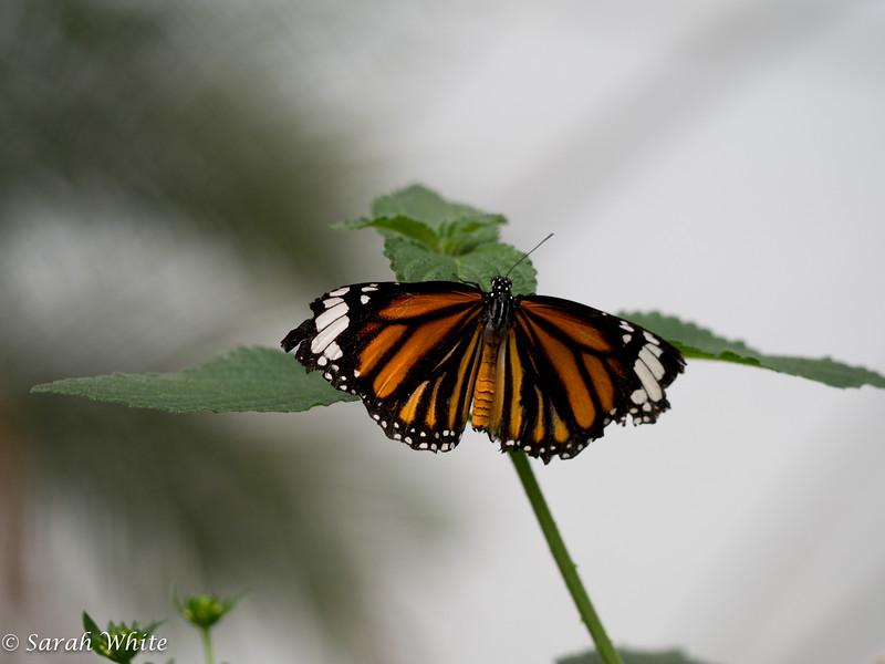 140503_ButterflyHouse_486.jpg