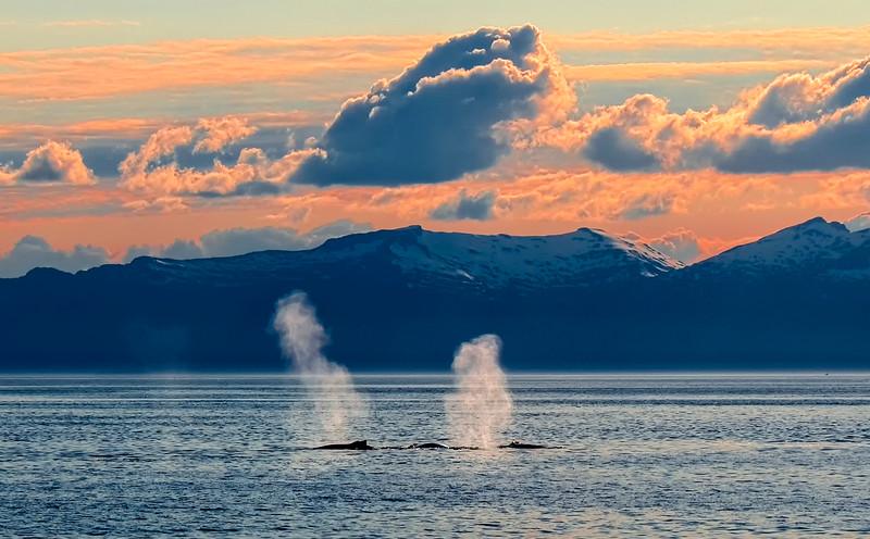 AK_Whales-10.jpg